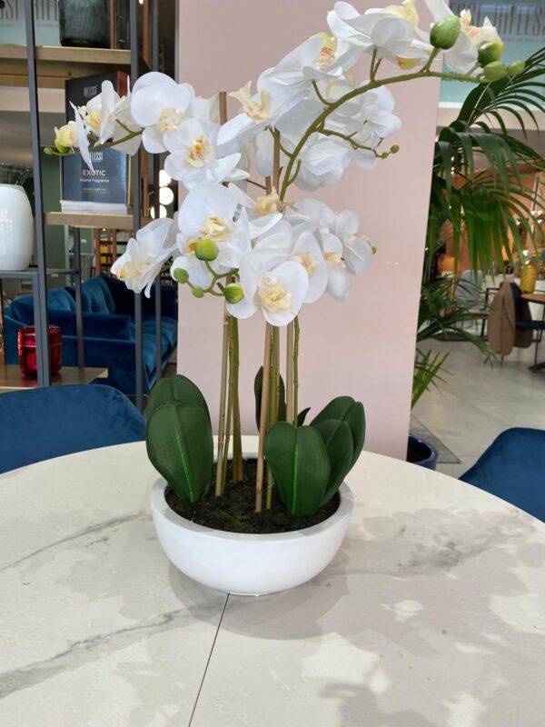 Pianta composizione fiori e vaso