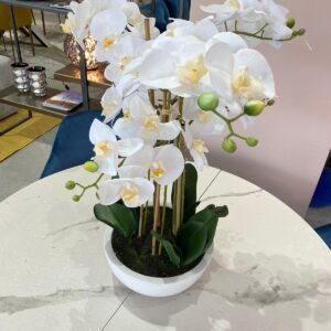 Pianta composizione fiori e vaso immagine
