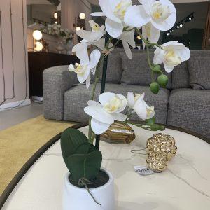 Orchidea vaso bianco lucido giochi di spazio